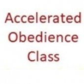 service_Accelerated_Obedience_Package-row-grid.jpg
